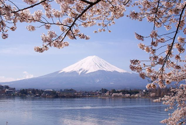Mount Fuji amidst cherry blossoms