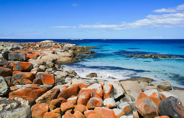 Lichen-stained rocks at the Bay of Fires, Tasmania