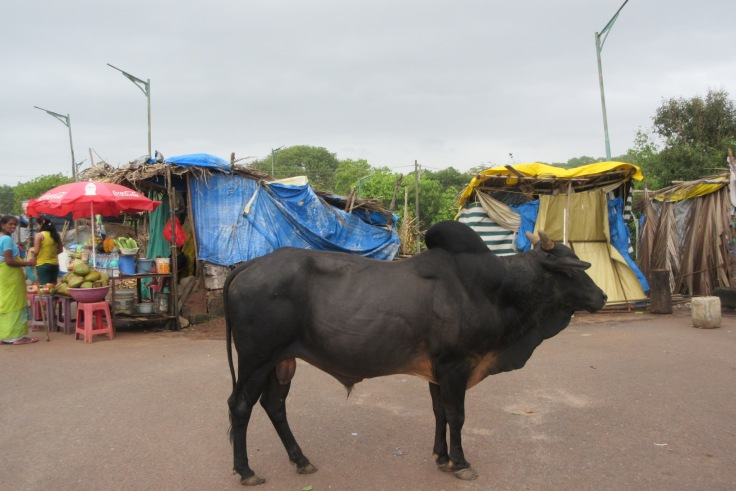 Just a cow wandering the market area in Goa