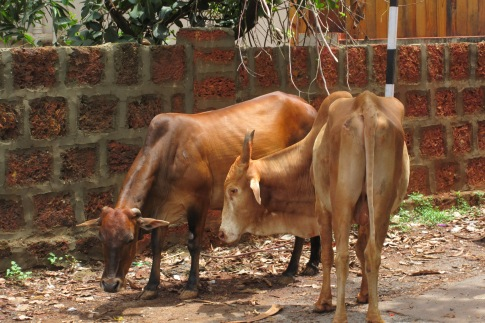 Some locals in Vagator, Goa. Photo taken and owned by Eeva Valiharju/Wanders The World