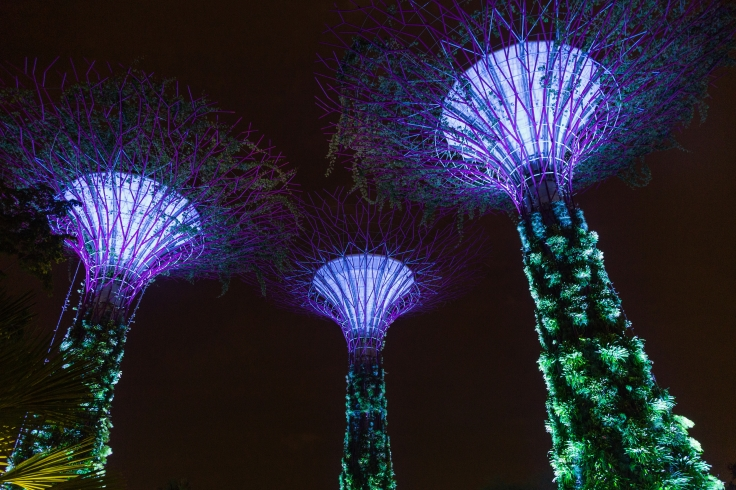 2016_singapur2c_gardens_by_the_bay2c_supertree_grove_281029