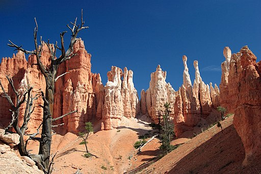 Hoodoos_from_the_Peekaboo_Loop_Trail_-_Bryce_Canyon_National_Park
