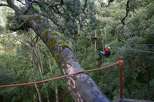 Canopy_tree_top_tours,_Tsitsikamma_Forest,_Western_Cape_(6253205746)